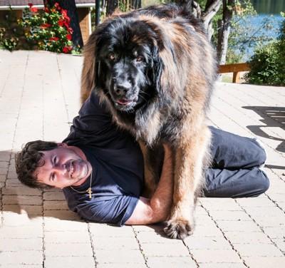 犬って何飼えばドヤ顔できる?🐶 トイプーとかチワワみたいな量産型は無しで  [242521385]YouTube動画>2本 ->画像>56枚