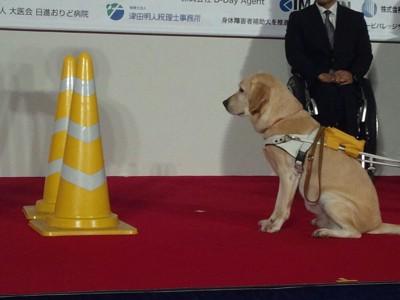 黄色いコーンポールと盲導犬