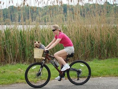 自転車のカゴに乗ってる犬