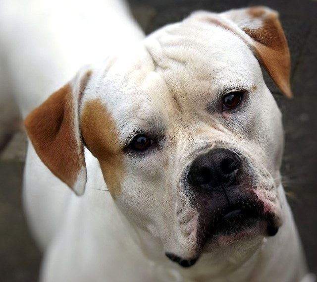 困り顔の犬