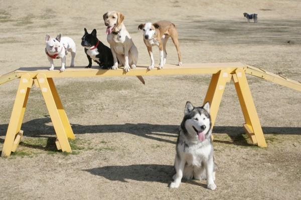 3:アジリティに座る犬