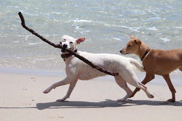 海岸で遊ぶ犬