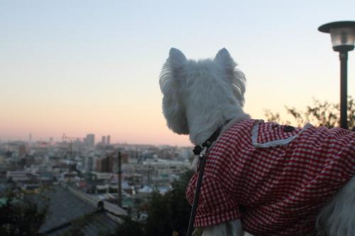 犬と夕焼け