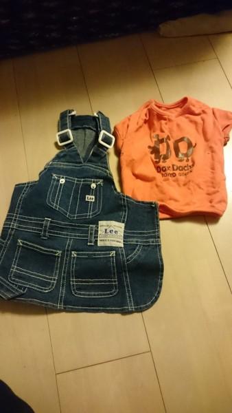 ミニチュアダックスのオレンジのシャツとパンツ