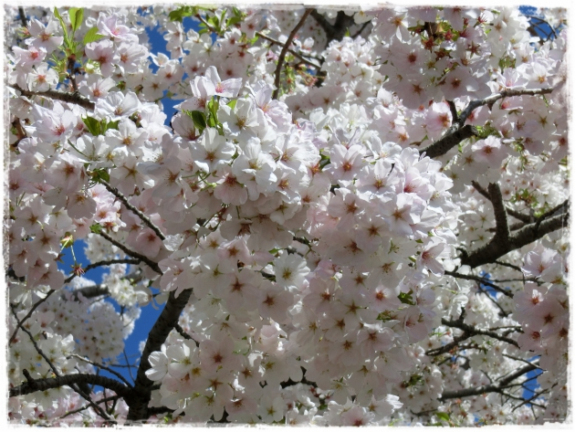 上野で花見