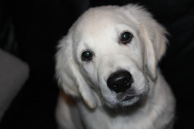 犬の脳腫瘍の症状は怖い