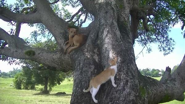 猫と一緒に木の上に