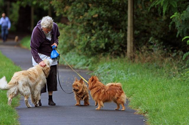 お散歩中の犬達