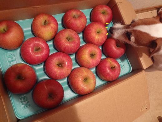 段ボール箱に入ったりんご