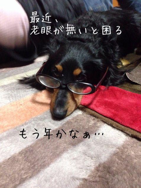 癌に侵された犬