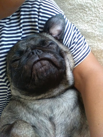 寝ている愛犬