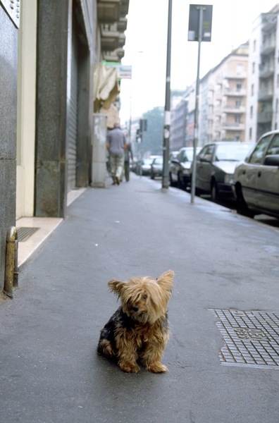 道路の真ん中にいる犬