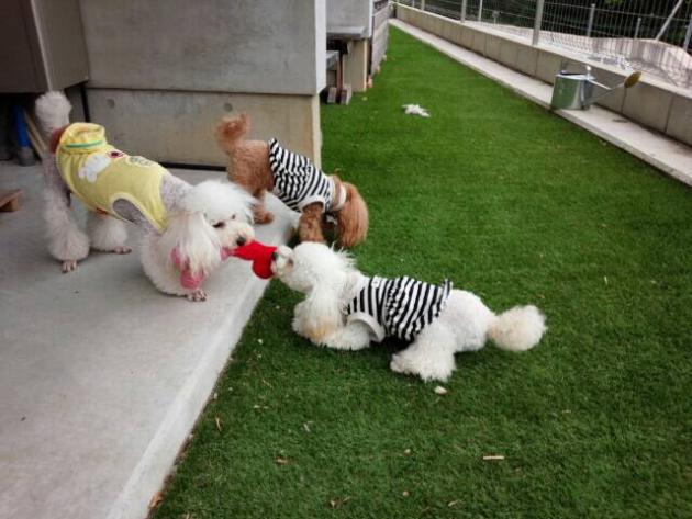 手作りおもちゃで遊ぶ犬たち