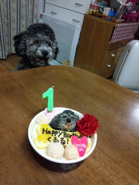ぶれていない犬とケーキ
