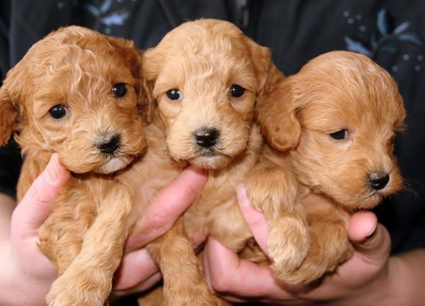 三匹の仔犬