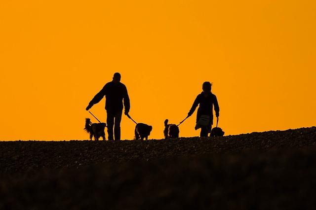 夕焼けに包まれる人と犬