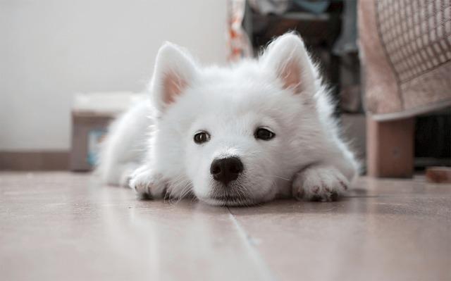 つまらなそうにしている子犬