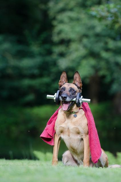 個性的な格好の犬