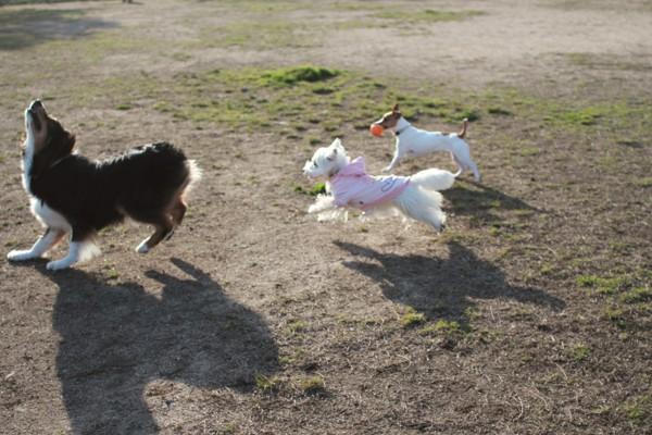 気に走っている犬達