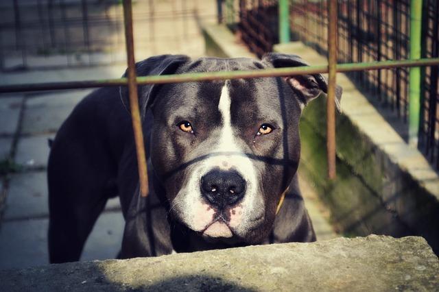 檻にいる犬