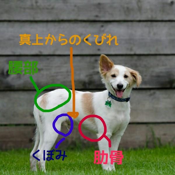犬の体の部位