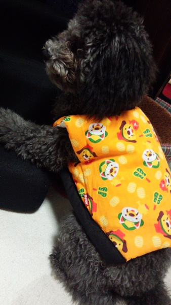 オレンジ色のちゃんちゃんこを着る犬