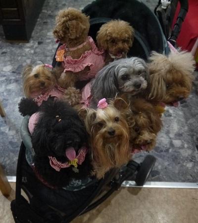カートにのる犬たち
