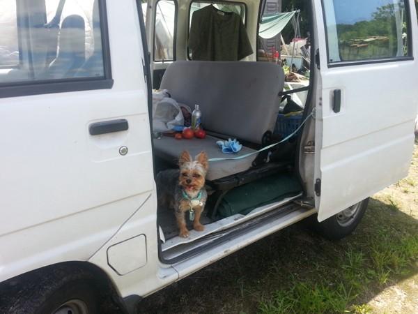 車の後部座席足元に座っている犬