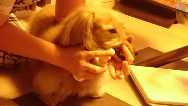 スプレーをかけられる愛犬