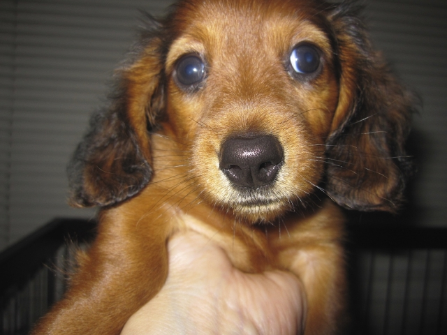 顔付近を触られる子犬