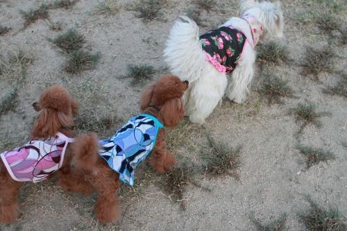 4:服を着た犬3頭