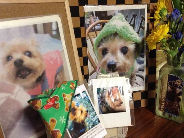 愛犬の写真と花と骨壺