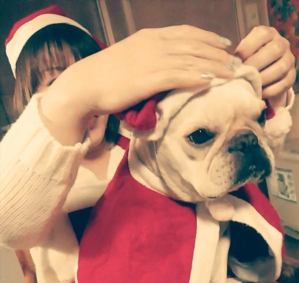サンタ姿に着替え中の愛犬
