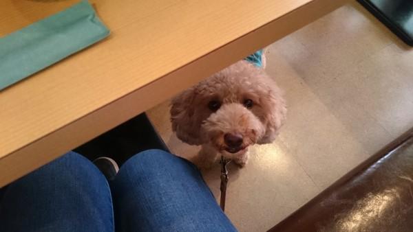テーブルの下にいる