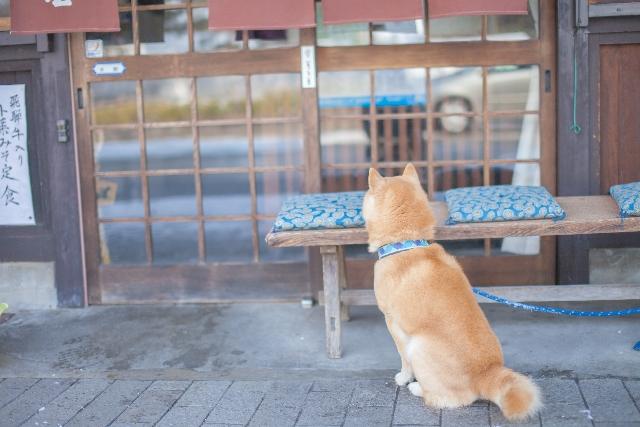 商店の前にいる柴犬