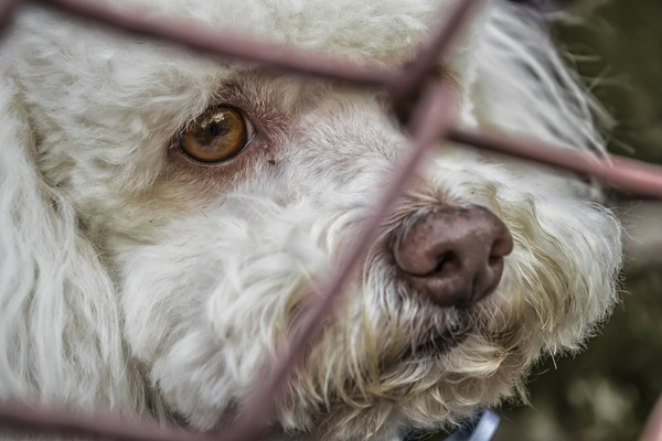 金網の向こうの白い犬