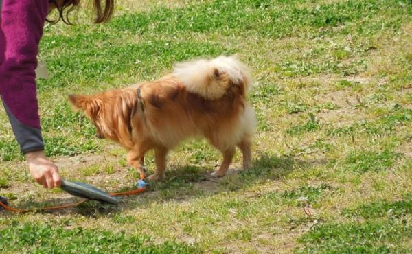 ディスクに顔を背ける犬