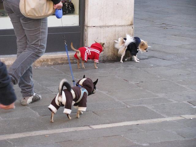 散歩してもらう犬