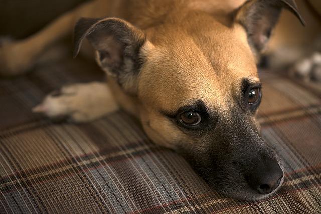 犬の脳腫瘍は進行が遅い