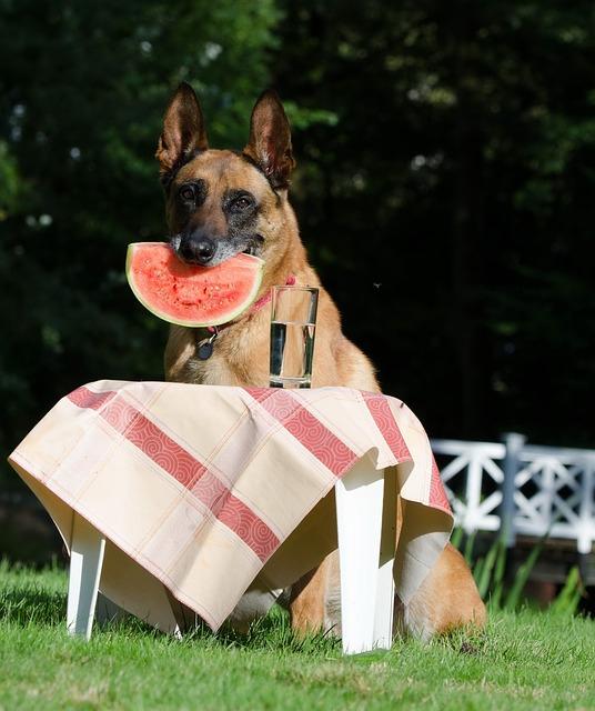 スイカを加える犬