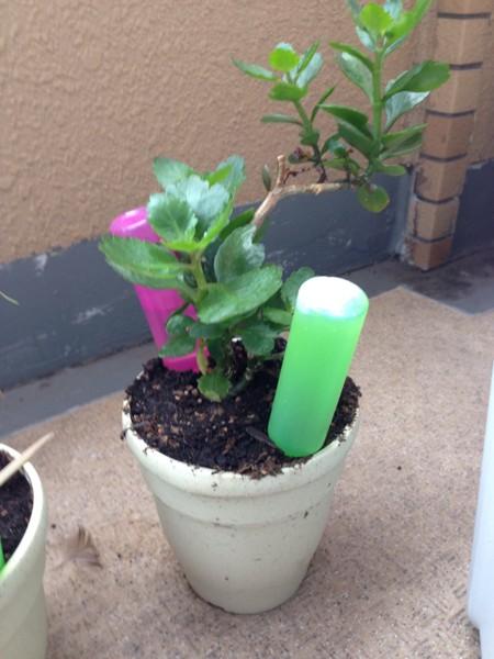 小さな鉢植えの