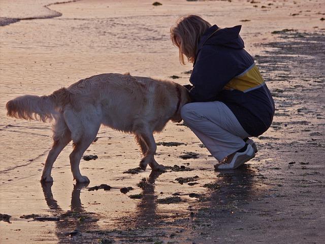 海辺の女性と犬