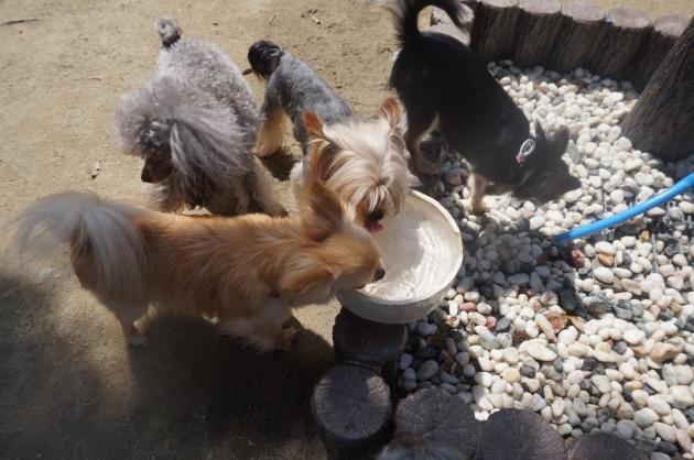 犬の水飲み