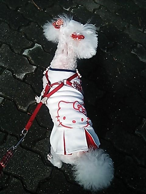 愛犬も季節に合わせたファッションをします