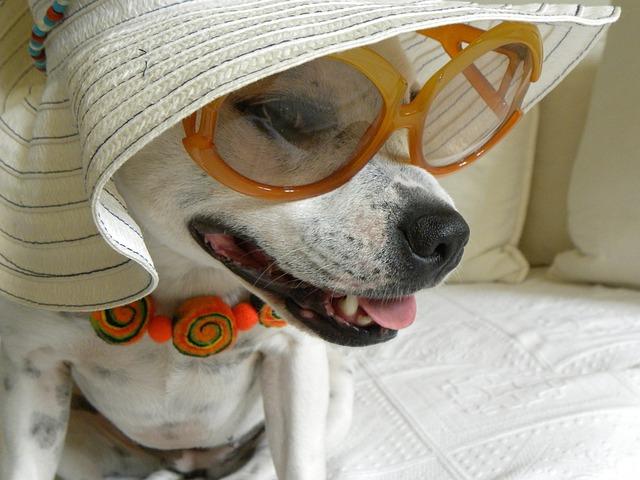 芸能人風の犬