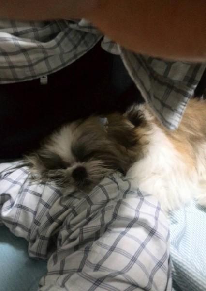 トト君の腕枕でお昼寝するココ