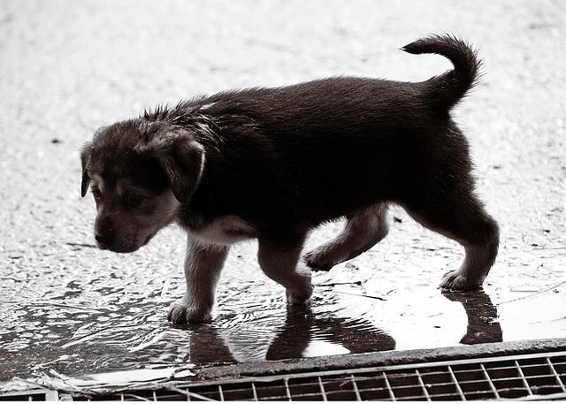 雨に濡れる子犬