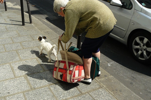犬とキャリバーッグとおばあちゃん