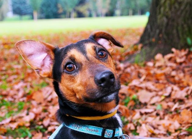 犬と楽しむ旅行