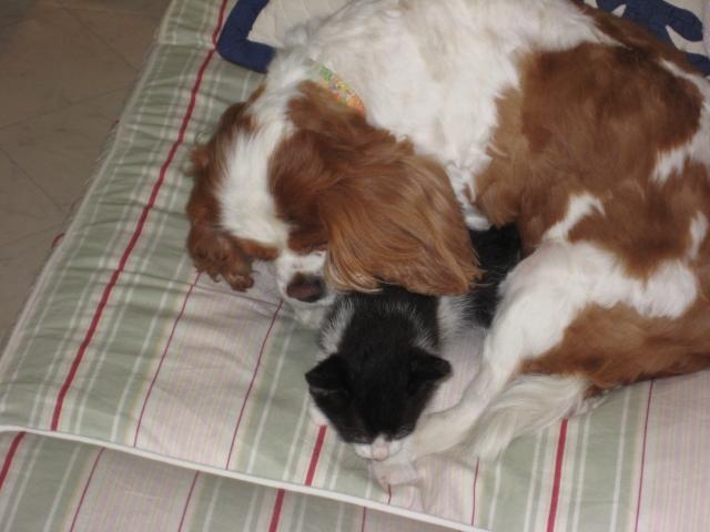 愛犬と子猫